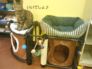 SPORTPET CAT CITY 使用例