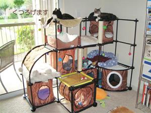 SPORTPET CAT CITY 使用例2