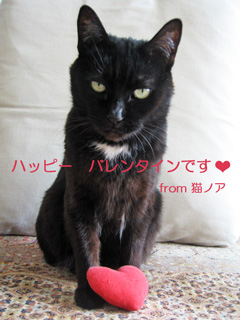 猫ノアからハッピーバレンタイン