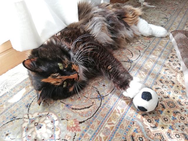 三毛猫ロカとボールおもちゃ