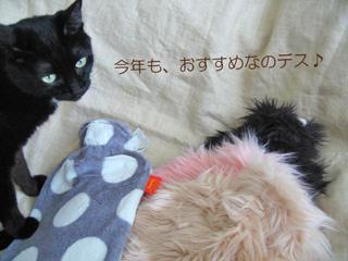 ファシーゆたんぽと猫ノア