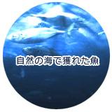 猫のウェットフード(缶詰)魚スペシャル