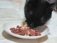 マグロ玄米猫缶を食べる猫ノア