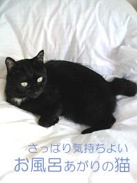 猫にやさしい無添加シャンプー ペットが洗える入浴剤