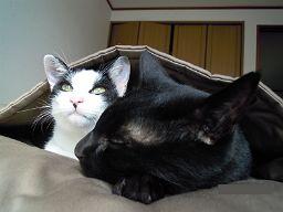 猫さんズとお布団ベッド キャットレット