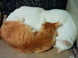 コットンビーンズ湯たんぽセットと猫さんズ