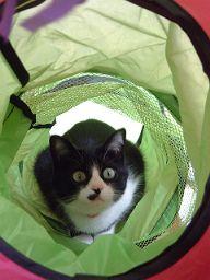 キャットトンネルアップと猫さん