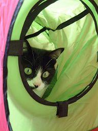 キャットトンネルと猫さん