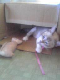 キャットキッカーと子猫さん