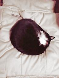 タキシード猫さんとお布団ベッド キャットレット