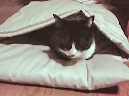 タキシード猫さんとお布団ベッド キャットレット2