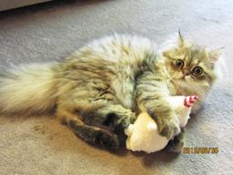猫さんとキャットキッカー