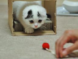 もんじゃちゃんとネズミおもちゃ1
