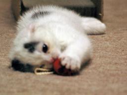 もんじゃちゃんとネズミおもちゃ2