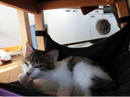 ジュリアンちゃんと猫用ハンモック2