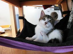 ジュリアンちゃんと猫用ハンモック1