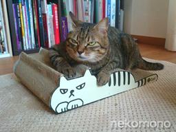 アンクちゃんとすね猫