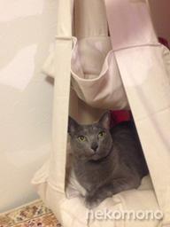 スラ君と猫ブランコ