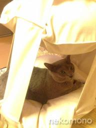 アルマちゃんと猫ブランコ