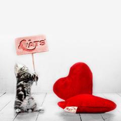 猫の安心おもちゃ