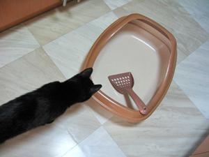 猫ノア、トイレをゲット
