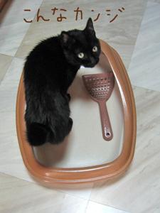猫ノア、トイレに入る