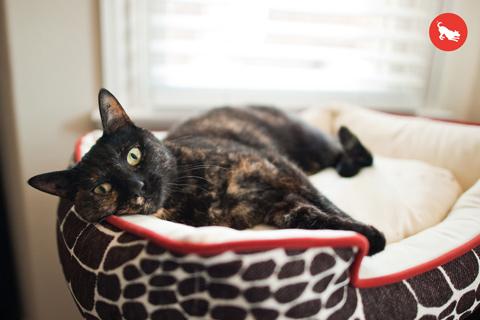 ペット用ラウンジベッド