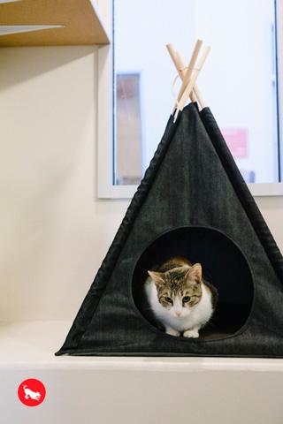 ティピーテントと猫さん