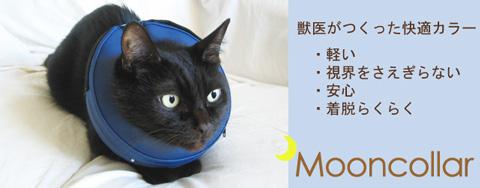 ペットの傷なめ防止、治療中にムーンカラー