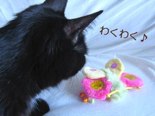 カラフルおもちゃと猫ノア