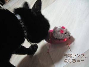 リモコンねずみと猫ノア