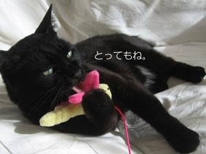 猫ノアとねこじゃらし