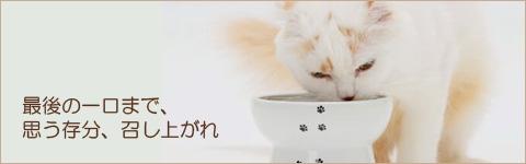 食べやすい猫用ボウル