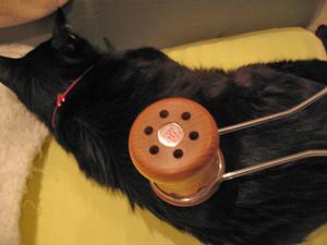 猫と温灸器