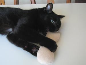 ねこ型キッカーと猫ノア3